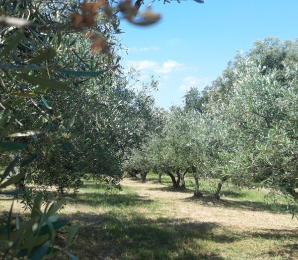 Olivir 3